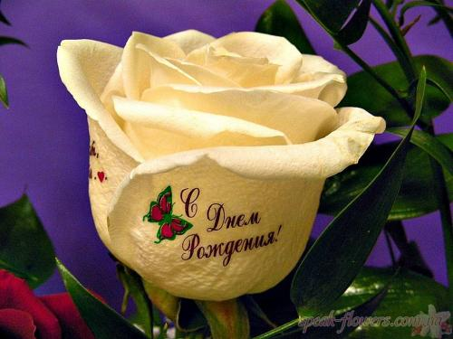 картинки розы с разни надпсям
